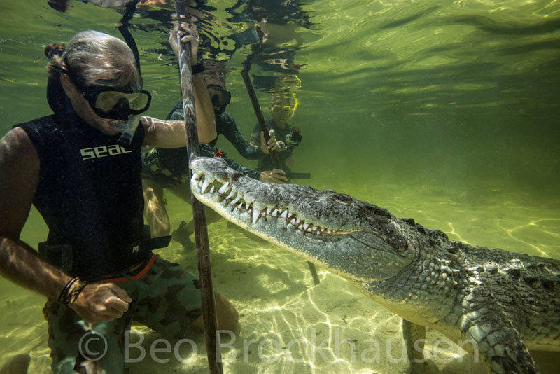 XTC's Matias Van Asch with crocodile friend, Banco Chinchorro